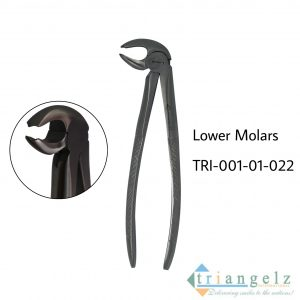 Lower Molars